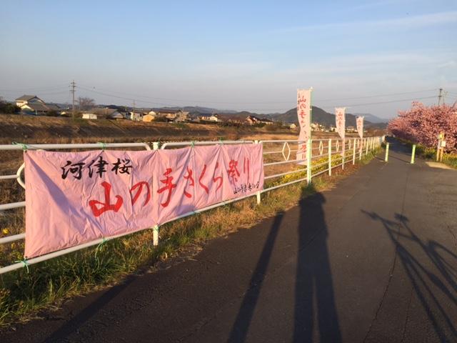 山の手桜③